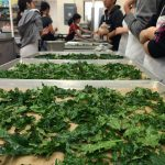 Comparing kale chip flavours
